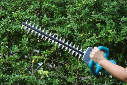Top 15 Best Cordless Hedge Trimmers in 2020