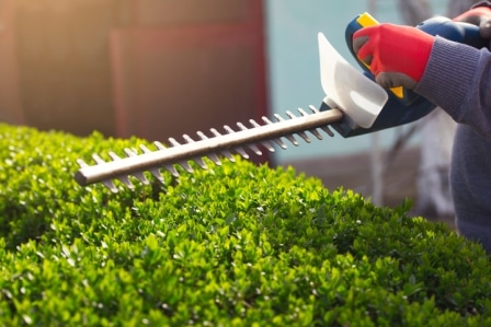 Top 15 Best Electric Hedge Trimmers in 2020