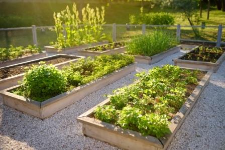 Top 15 Best Raised Garden Beds in 2020