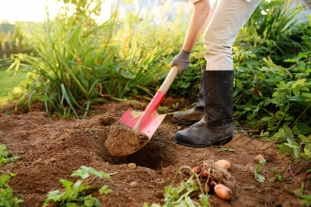 Top 15 Best Shovels for Gardening in 2020
